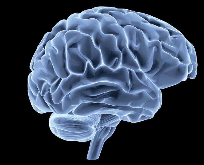 Prendre soin de son cerveau